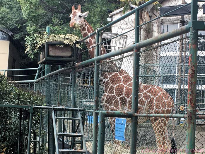 福岡市動植物園23