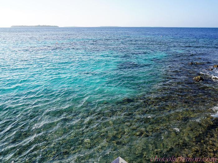 アミラの海中1
