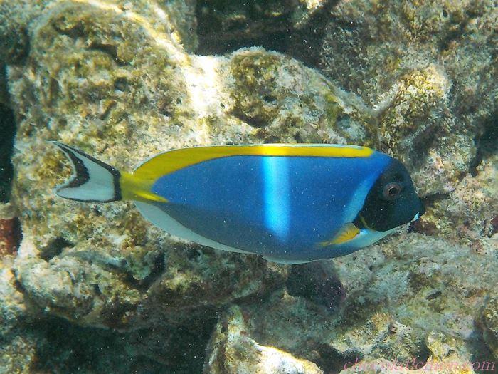 モルディブ魚